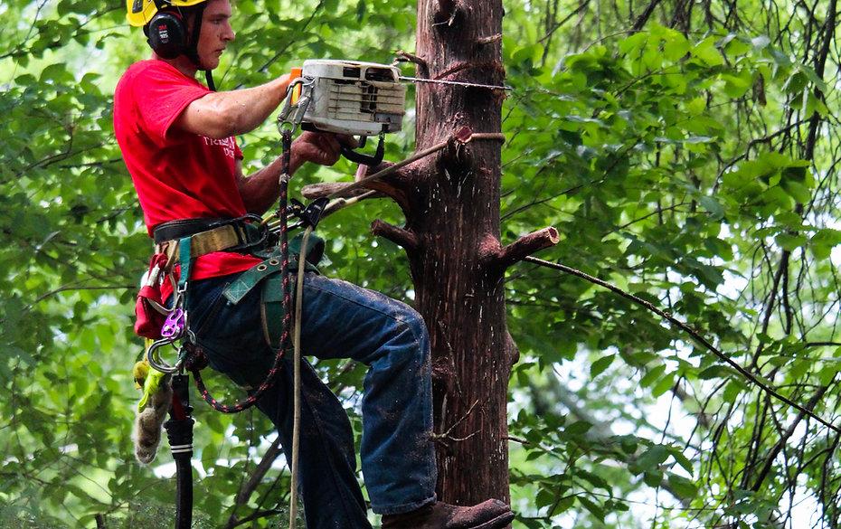 tree care service - lawrence, KS