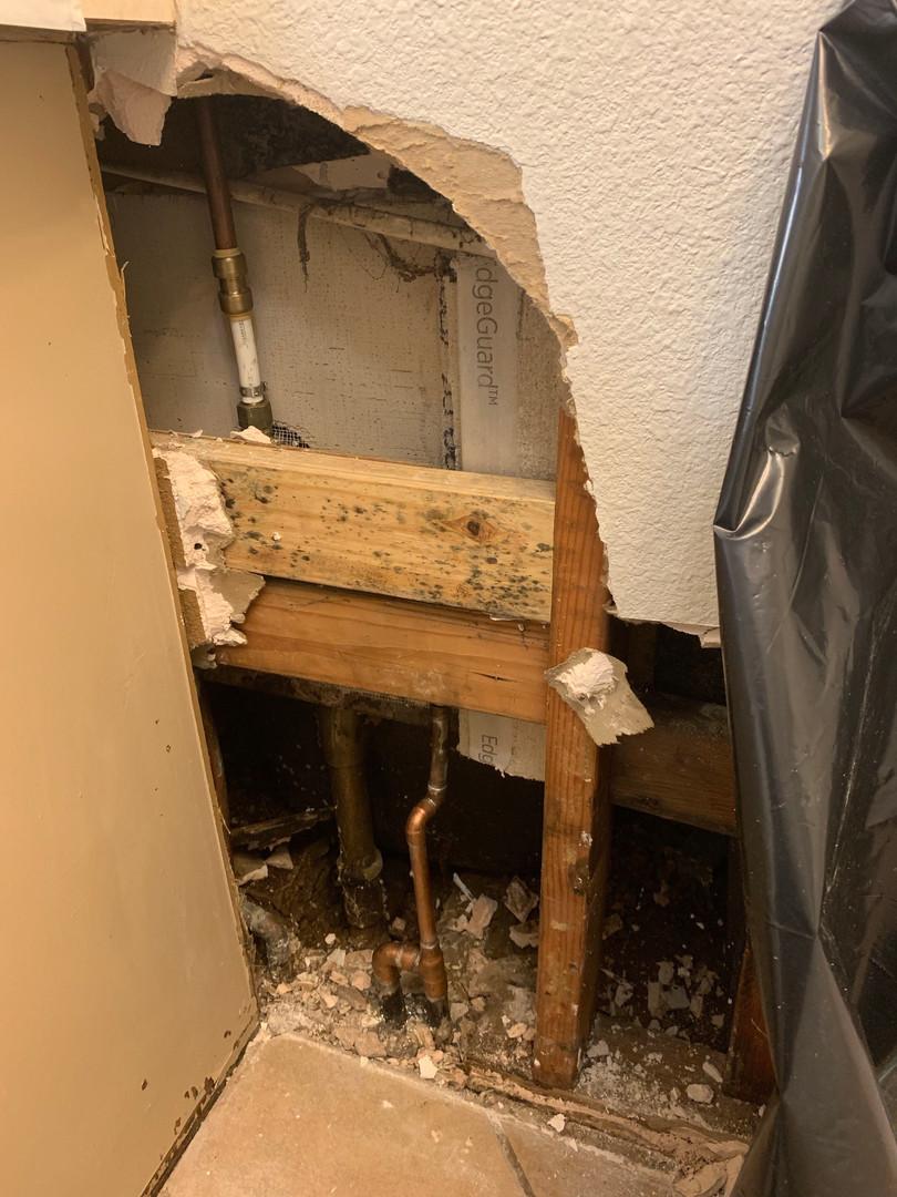 dallas mold removal company