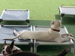 daytime dog boarding pineville nc