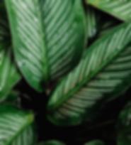 indoorplants.png