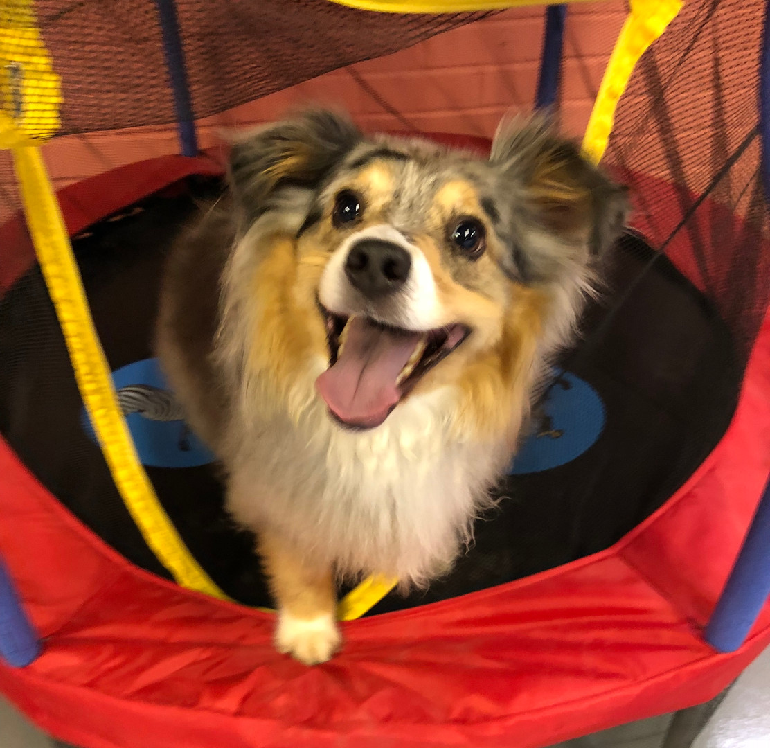 Smiling dog at Bethlehem doggy daycare