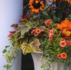 bright orange potted plants