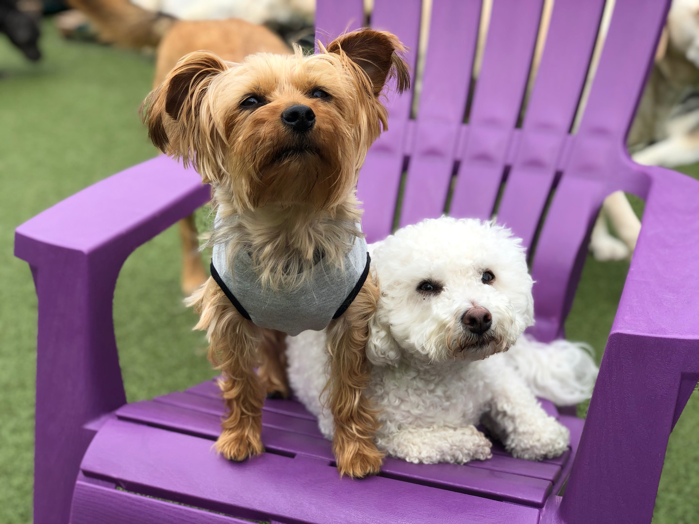 Sharp dressed dog and friend at doggy day care