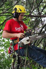local tree service near lawrence ks