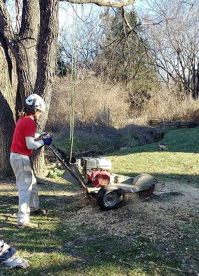 tree service company lawrence, ks