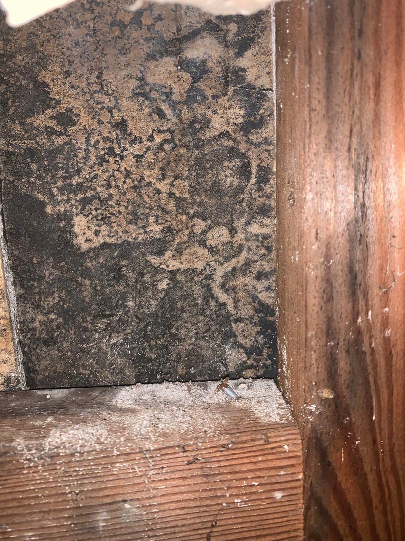 mold removal company dallas