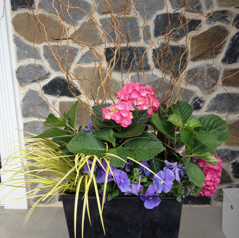 medium pot with greens and bright flowers for spring