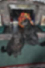 DonnaLynn (2nd dog) 3.JPG
