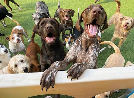 The Puppy Palace Doggie Day Care & Spa