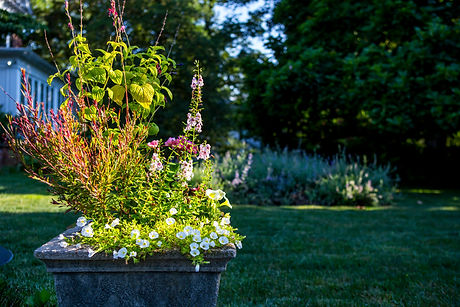 spring container gardens by bloom