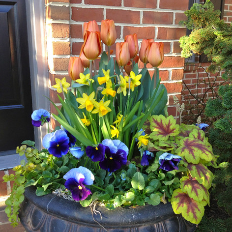 spring container large pot with tulips and pansies