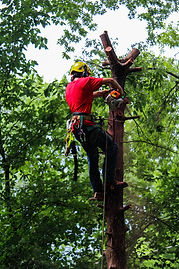tree trimming near lawrence