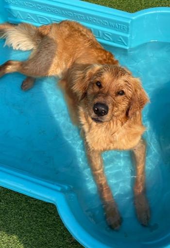 free roam dog boarding pineville nc