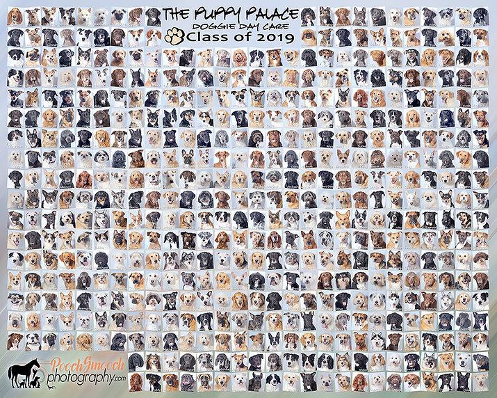 Puppy Palace-Digital-2019 class photo-50