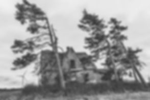 grayscale-photography-of-trees-and-house