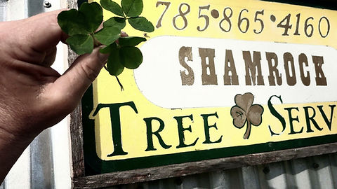 tree service companies lawrence, KS