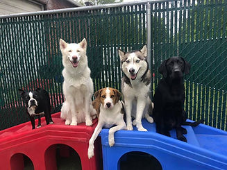 Doggie Day Care - Bethlehem, PA