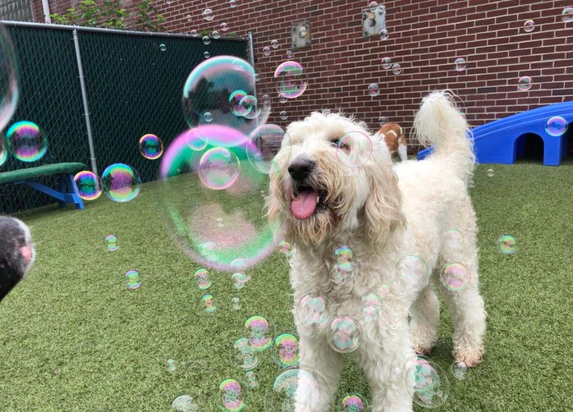 Dog enjoying bubble party at day care