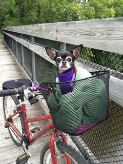 luella-bike-dog.jpg