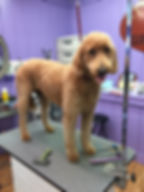 dog grooming services lebanon