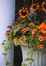 fall container gardens - outdoor planted pots