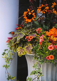 fall-container-garden.png