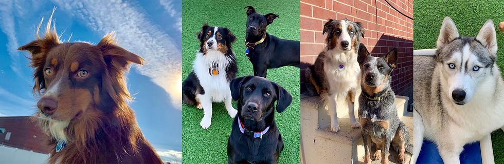 doggie day care near Charlotte NC