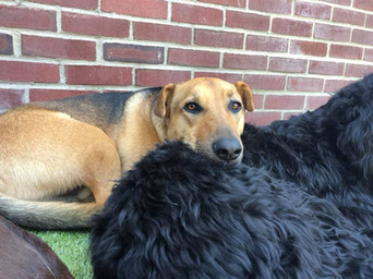 Doggie making friends at day care