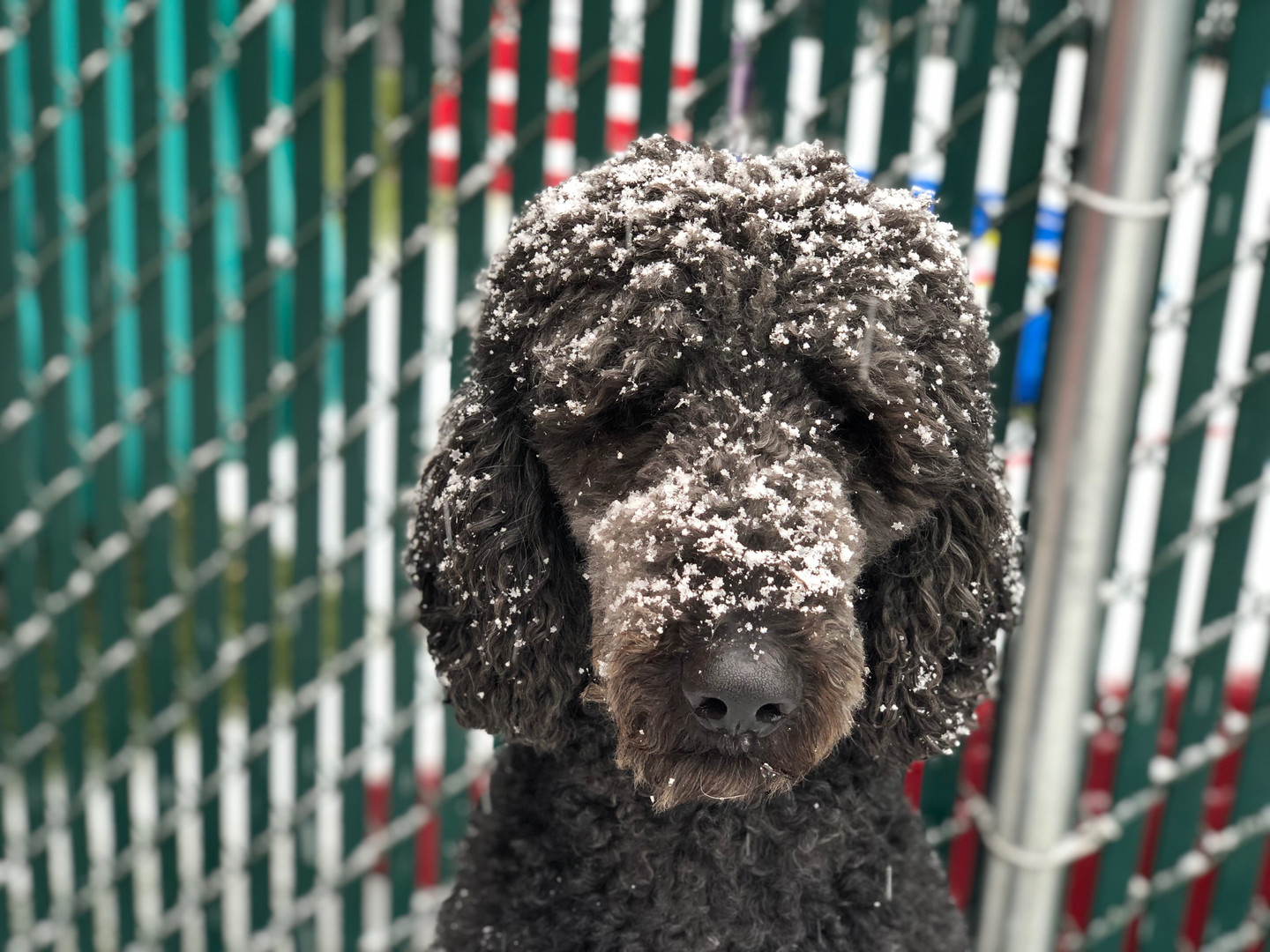 Playing in the snow at doggie day care