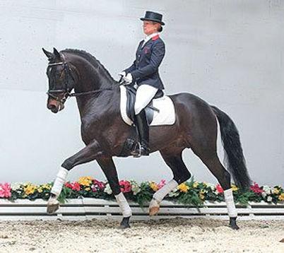 Sagnol, stallion