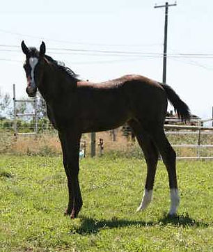 Royal Dawn, 2007 filly