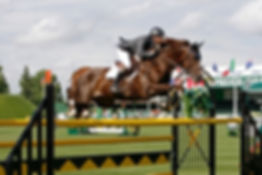 Vaust S, Grand Prix show jumping stallion