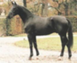 Freestyle, stallion