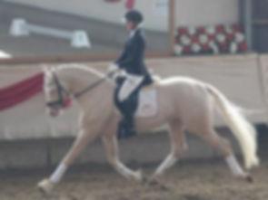 Qaside MD, stallion