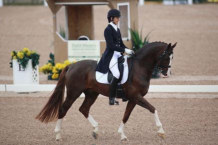 Fabregas, Hanoverian stallion