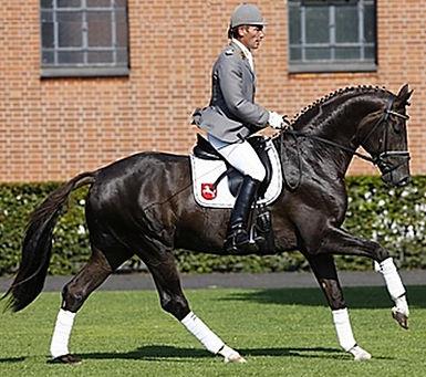 Dannebrog, stallion