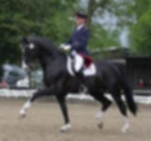 Rascalino, stallion