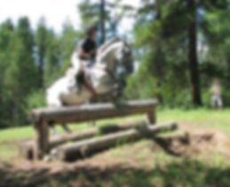 Allthatbrass, multitalented mare succesful in eventing, dressage, and jumping.