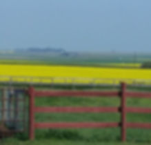 MSH farm vew