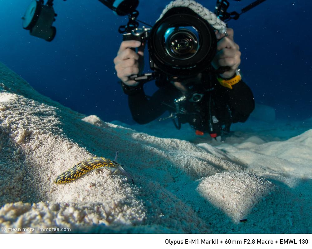 ทากมีขนาดตัวประมาณ 1 นิ้ว สามารถอยู่ร่วมเฟรมกับนักดำน้ำได้เมื่อใช้เลนส์ EMWL