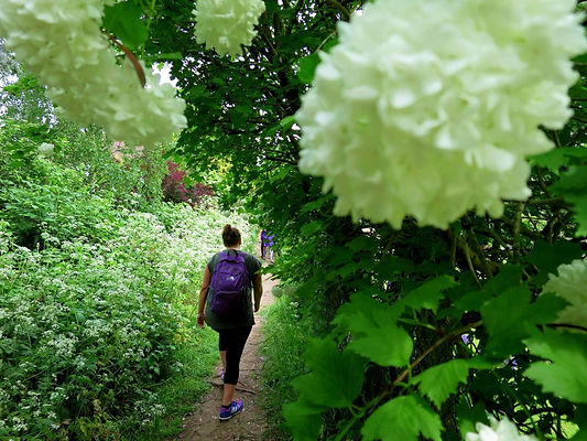 London-Walks-The-Oak-Trail-flowers-and-S