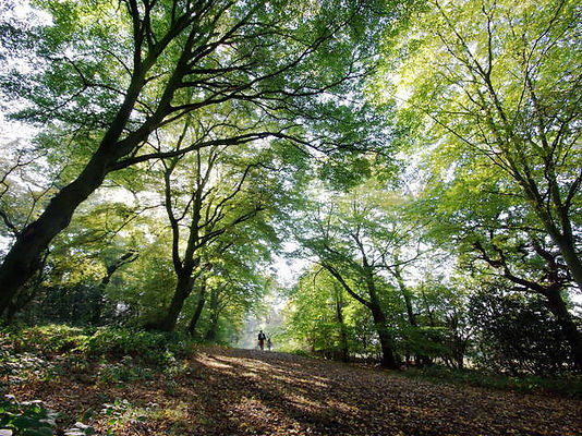 London-Walks-The-Oak-.jpg