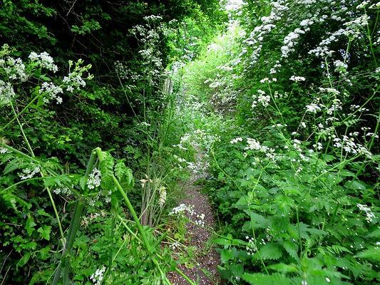 London-Walks-The-Oak-Trail-greenery-at-t