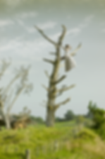 Lookout-Tree-0624.png
