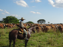 Central and South America Trip Planner | GeoLuxe Travel LLC | cattle rancher