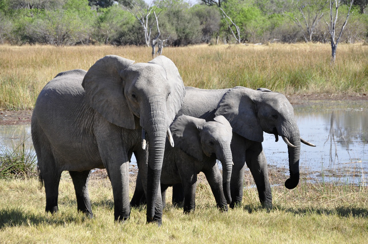 Africa Trip Planner | GeoLuxe Travel LLC | group of elephants