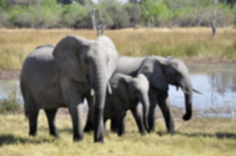 GeoLuxe Travel, LLC Africa travel photos - elephant herd