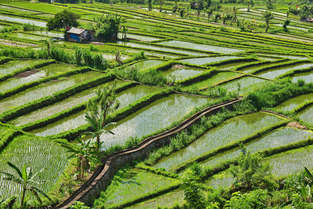 Custom Asia Vacation | GeoLuxe Travel LLC | rice fields