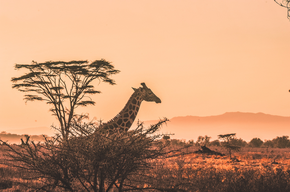 Africa Trip Planner | GeoLuxe Travel LLC | giraffe at sunset