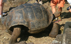 Central and South America Trip Planner | GeoLuxe Travel LLC | tortoise